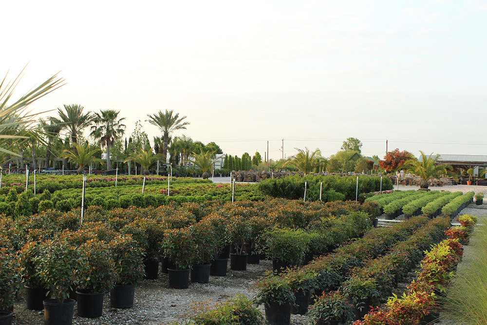 How To Start A Plant Nursery In Texas Thenurseries