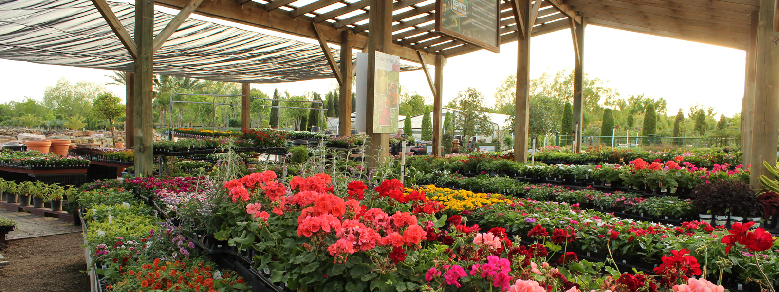 Retail Shades Of Texas Nursery Landscaping The Woodlands Magnolia Conroe