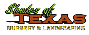 Shades of Texas Nursery & Landscaping – The Woodlands – Magnolia – Conroe